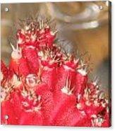 Red Cactus Acrylic Print by Anais DelaVega