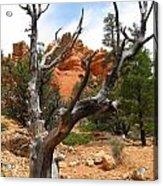 Red Canyon Tree And Rocks Acrylic Print