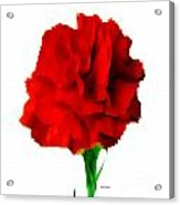 Red Carnation Acrylic Print
