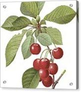 Red Cherry Acrylic Print