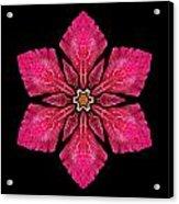 Red Clematis I Flower Mandala Acrylic Print