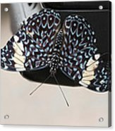 Red Cracker Butterfly Acrylic Print