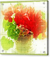 Red Cyclamen On Windowsill Acrylic Print