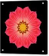Red Dahlia Hybrid I Flower Mandala Acrylic Print