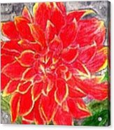 Red Dalia  Acrylic Print