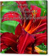 Red Day Lily And Quote Acrylic Print