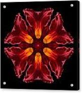 Red Daylily II Flower Mandala Acrylic Print