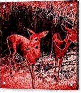 Red Deer Acrylic Print