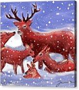 Red Deer Family Acrylic Print
