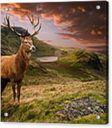 Red Deer Stag And Mopuntains Acrylic Print