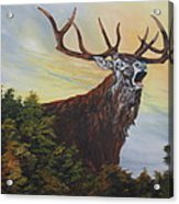 Red Deer - Stag Acrylic Print
