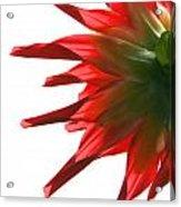 Red Devil Acrylic Print