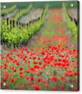 Red District Acrylic Print