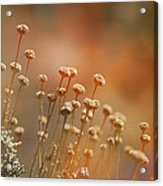 Red Dream Acrylic Print