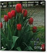 Red Dynasty Red Tulips Acrylic Print