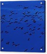 Red Eye Flight Acrylic Print by Todd Sherlock