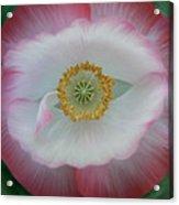 Red Eye Poppy Acrylic Print