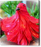 Red Feathers Acrylic Print
