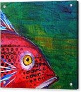 Red Fish Acrylic Print