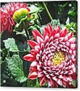 Red Floral Acrylic Print