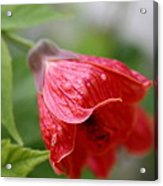 Red Flower Acrylic Print