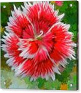 Red Flower Macro Acrylic Print