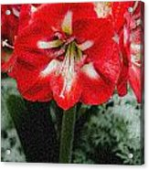 Red Flower With Starburst Acrylic Print