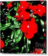 Red Flowers Among Green Leaves Acrylic Print