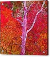 Pink Tree In A  Red Forest Acrylic Print