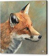 Red Fox Portrait Acrylic Print by David Stribbling
