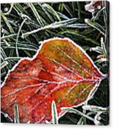 Red Frosty Leaf On Frozen Ground Acrylic Print