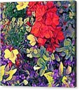 Red Geranium With Yellow And Purple Flowers - Horizontal Acrylic Print