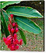 Red Ginger Chandelier Acrylic Print