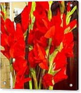 Red Glads Blooming Acrylic Print