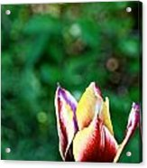 Red Gold And Green Acrylic Print