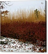 Red Gold Hedge Acrylic Print