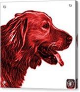 Red Golden Retriever - 4047 Fs Acrylic Print