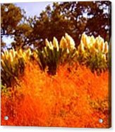 Red Grass Acrylic Print