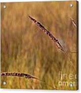 Red Grass Acrylic Print