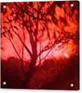 Red Haze Acrylic Print