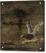 Red Head Duck Old Box Acrylic Print