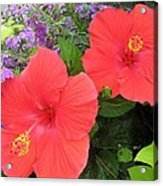 Red Hibiscus And Purple Blossoms Acrylic Print