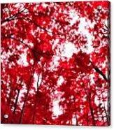 Red I Acrylic Print