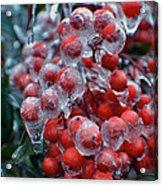 Red Ice Berries Acrylic Print