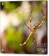 Red Invisible / Invisible Web  Acrylic Print