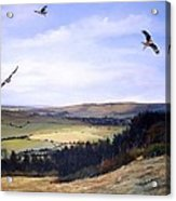 Red Kites At Coombe Hill Acrylic Print