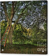 Red Ladder And Oak Acrylic Print