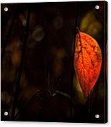 Red Leaf 2 Acrylic Print
