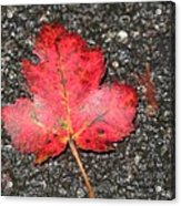 Red Leaf On Pavement Acrylic Print