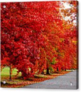 Red Leaf Road Acrylic Print